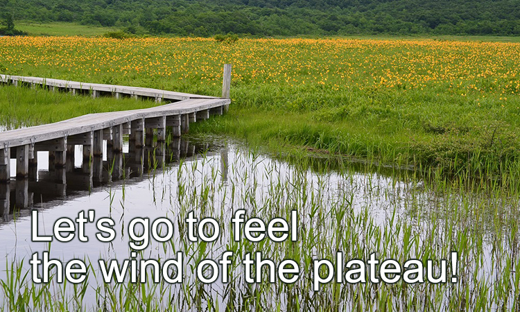 Let's go to feel the wind of the plateau!