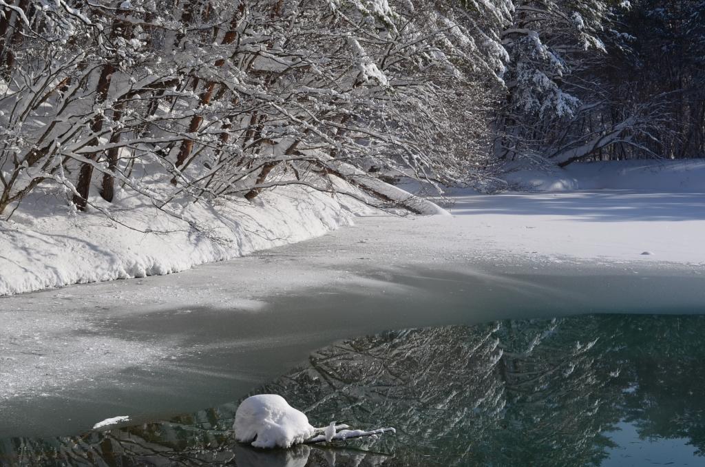 冬の青沼の写真