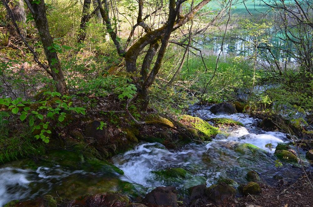 2019.5.17青沼に流れる川
