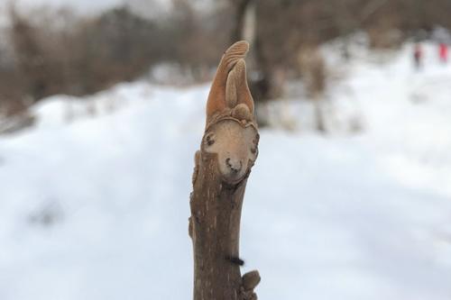 冬の植物のイメージ写真