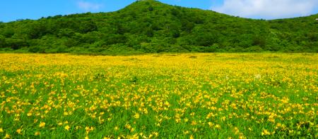 【雄国沼】開花情報