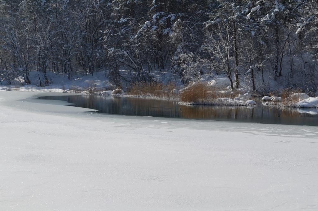 瑠璃沼の写真