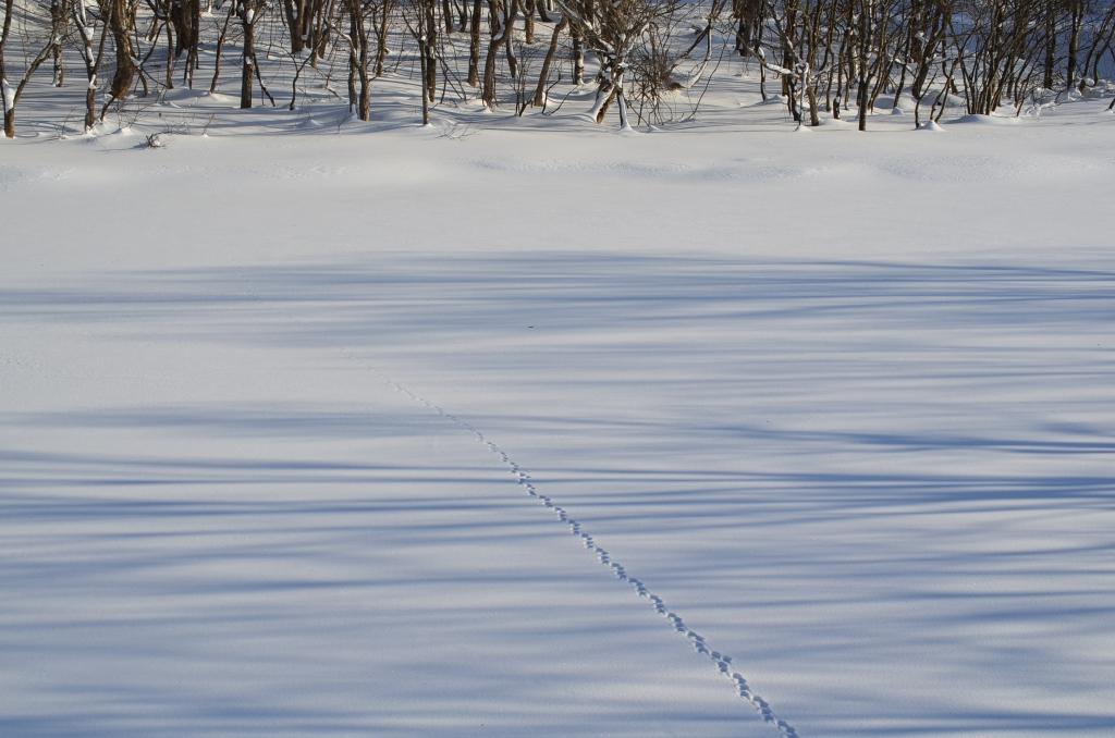 桧原湖の雪上の足跡の写真