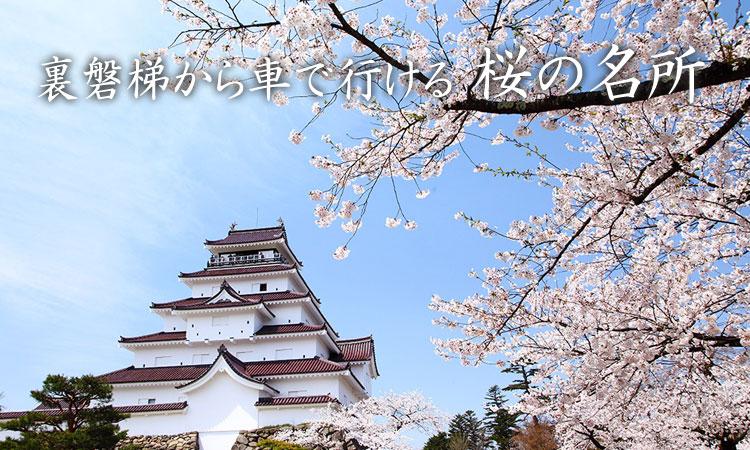 裏磐梯から車で行ける桜の名所