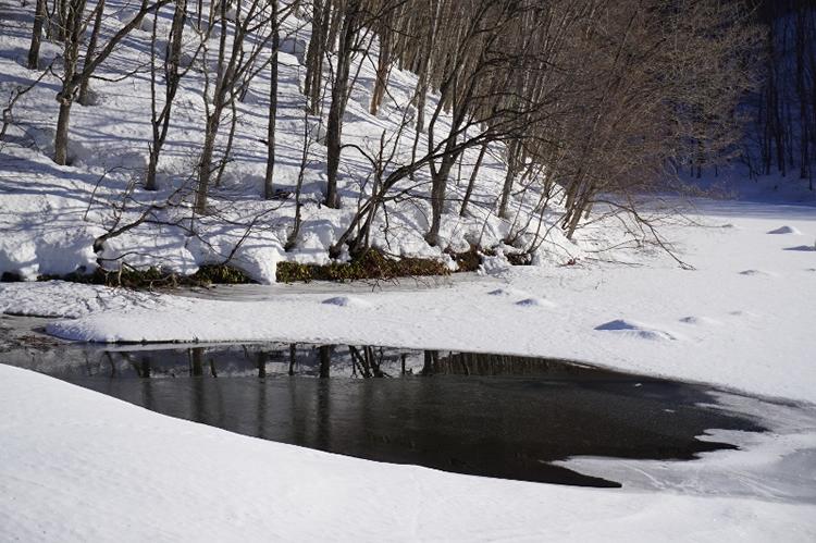 曲沢沼の画像2