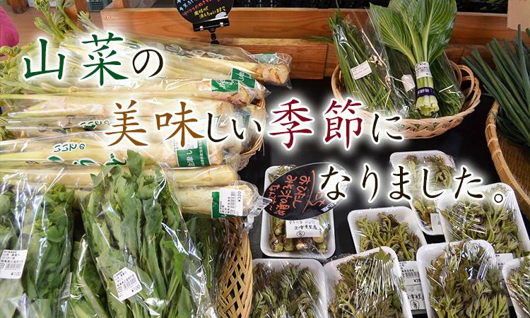 山菜の美味しい季節になりました。