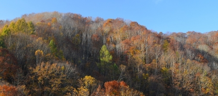裏磐梯の山の紅葉はそろそろ終盤に差し掛かりました。
