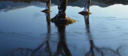 久しぶりの快晴。湖の凍り始めの湖面は美しいですね!