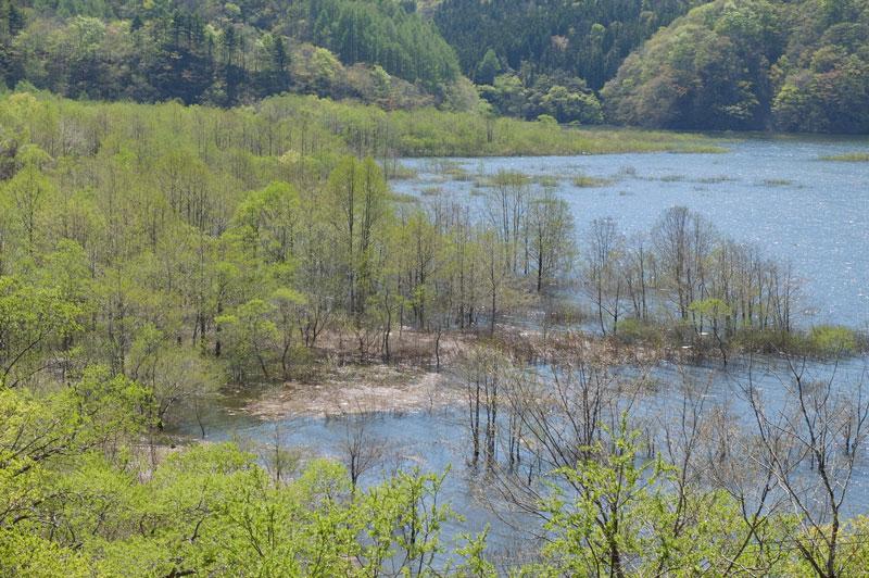 秋元湖東岸