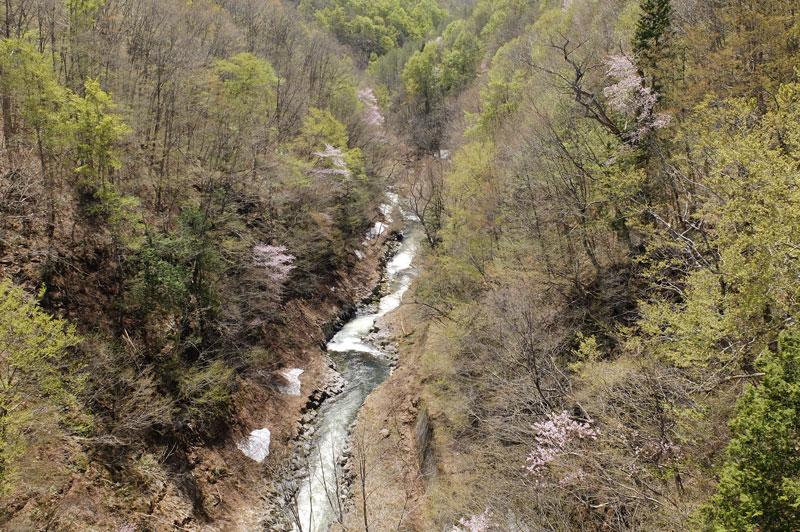 中津川渓谷・春