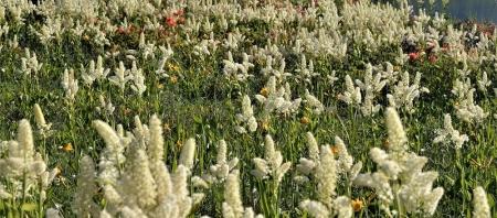 花咲く雄国沼